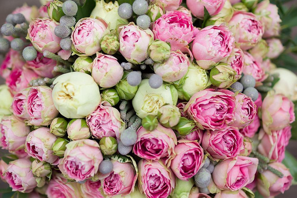уже пионные розы фото три