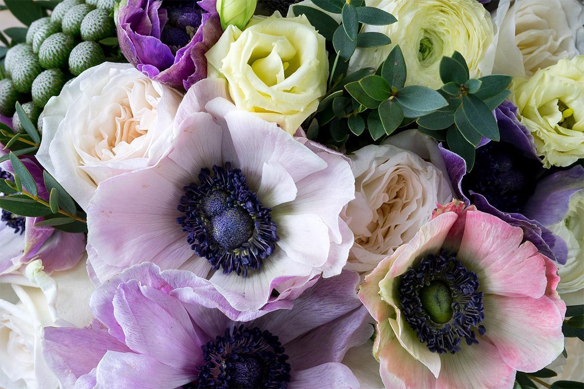 Цветы анемоны купить в москве